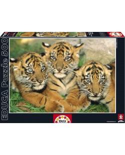 Puzzle Educa de 500 piese - Tigrii