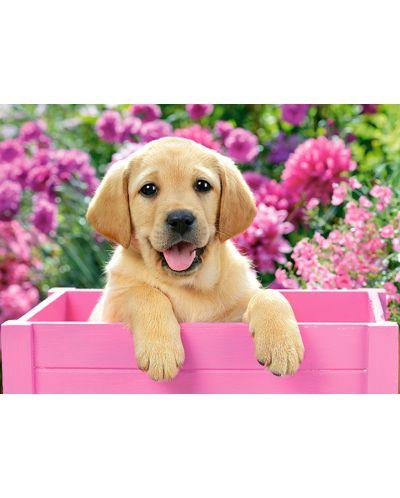 Puzzle Castorland de 300 piese - Labrador mic intr-o cutie roz - 2