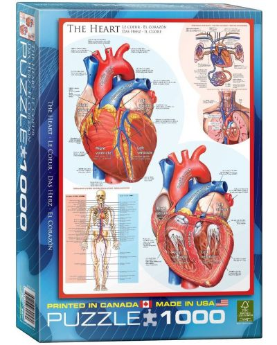 Puzzle Eurographics de 1000 piese – Corpul uman, Inima - 1