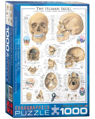 Puzzle Eurographics de 1000 piese – Craniu uman - 1