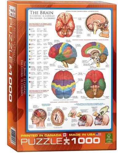 Puzzle Eurographics de 1000 piese – Corpul uman, Creier - 1