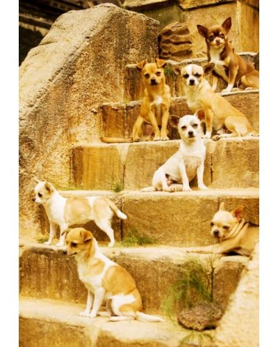 Beverly Hills Chihuahua (DVD) - 12