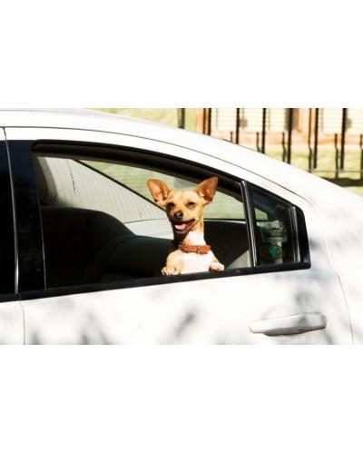 Beverly Hills Chihuahua (DVD) - 2