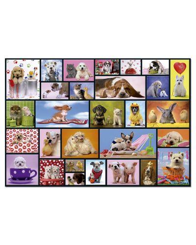 Puzzle Educa de 1000 piese - Momente impartasite - 2