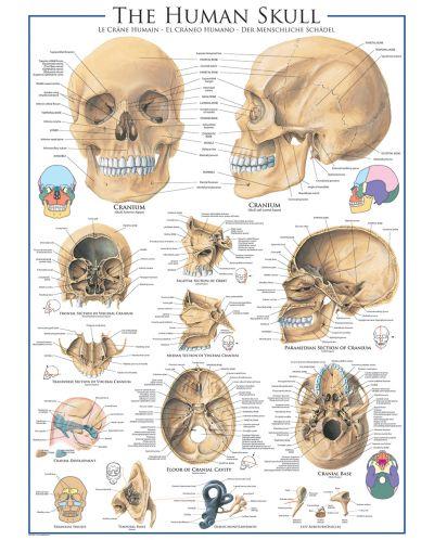 Puzzle Eurographics de 1000 piese – Craniu uman - 2