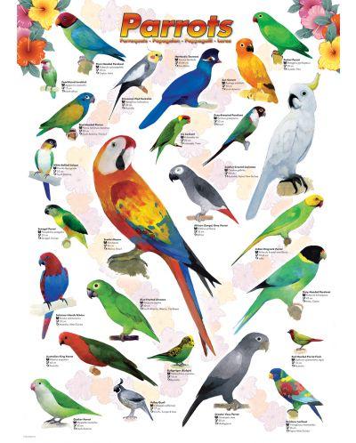 Puzzle Eurographics de 1000 piese – Papagali - 2