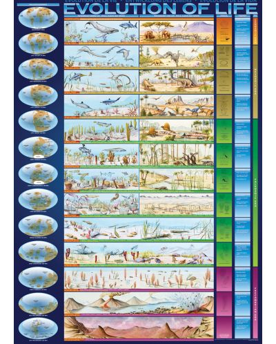 Puzzle Eurographics de 1000 piese – Evolutia vietii - 2