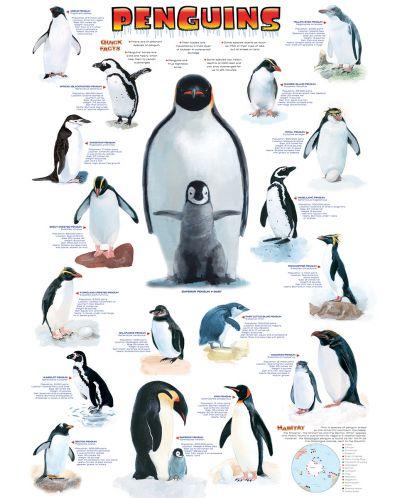 Puzzle Eurographics de 1000 piese – Pinguini - 2