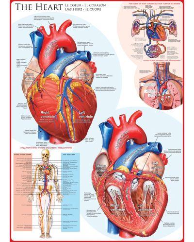 Puzzle Eurographics de 1000 piese – Corpul uman, Inima - 2