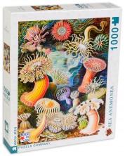 Puzzle New York Puzzle de 1000 piese - Anemone ne mare