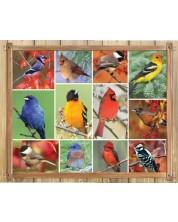 Puzzle Springbok de 1000 piese - Songbirds
