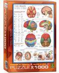 Puzzle Eurographics de 1000 piese – Corpul uman, Creier - 1t