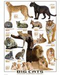 Puzzle Eurographics de 1000 piese – Pisici mari - 2t