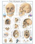 Puzzle Eurographics de 1000 piese – Craniu uman - 2t
