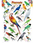 Puzzle Eurographics de 1000 piese – Papagali - 2t