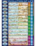 Puzzle Eurographics de 1000 piese – Evolutia vietii - 2t