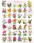 Puzzle Eurographics de 1000 piese – Orhidee - 2t