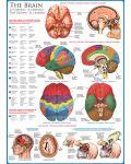 Puzzle Eurographics de 1000 piese – Corpul uman, Creier - 2t